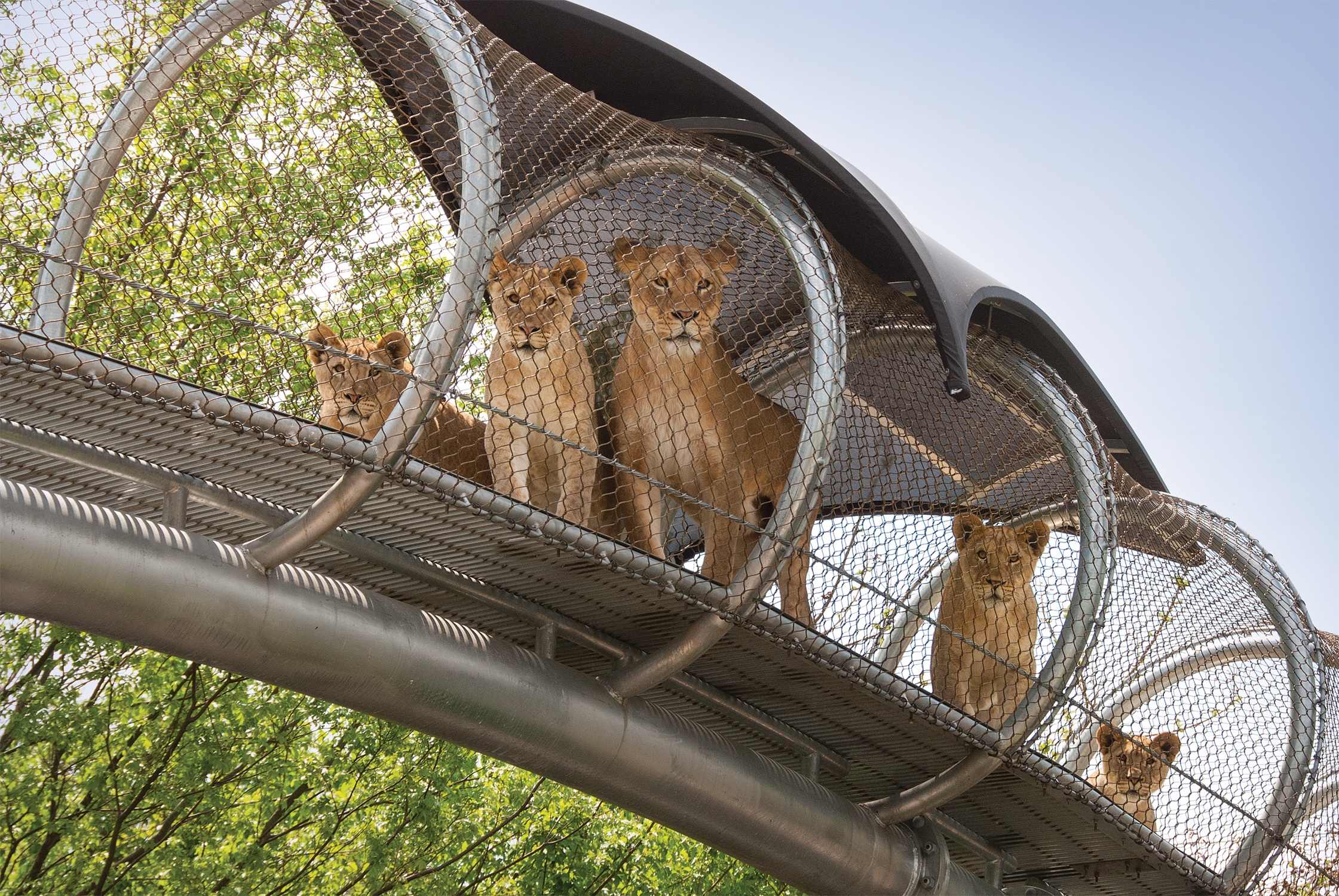 Philadelphia Zoo Announces Opening of WildWorks Presented by